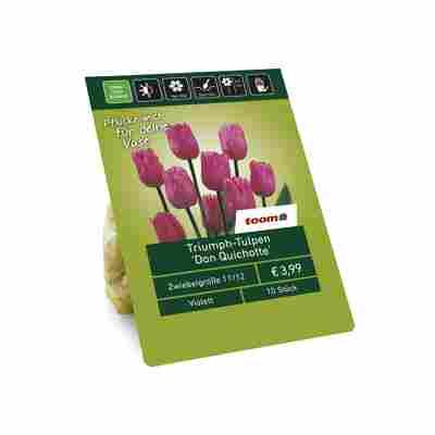 Triumph-Tulpen 'Don Quichotte' violett 10 Zwiebeln