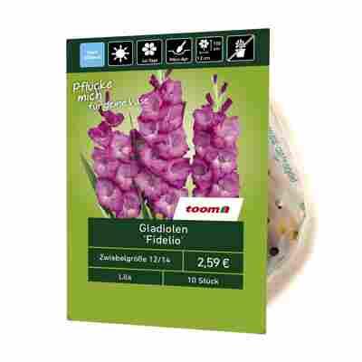 Gladiolen 'Fidelio' 10 Stück