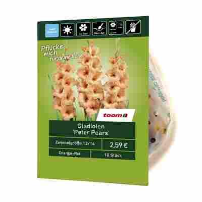 Gladiolen 'Peter Pears' 10 Stück