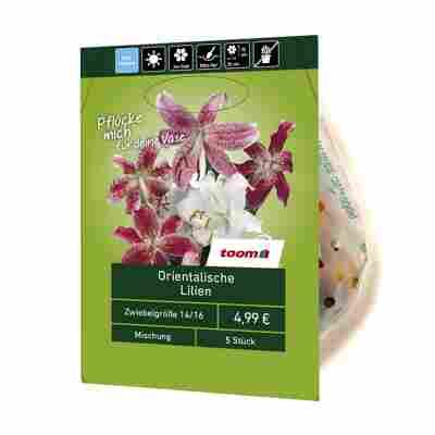 Orientalische Lilien 5 Stück