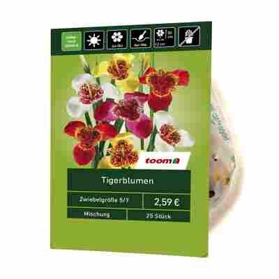 Tigerblumen-Mix 25 Stück