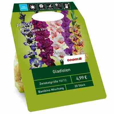 Gladiolen 'Bambino' Mischung 20 Zwiebeln