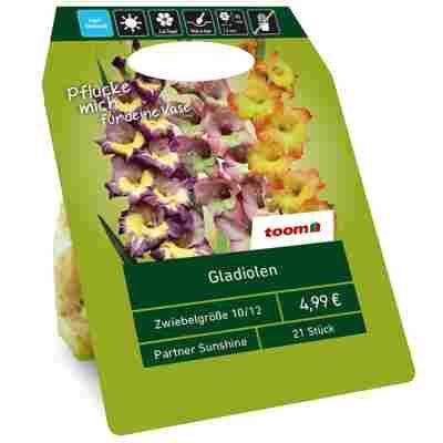 Gladiolen 'Sunshine Partner' Mischung 21 Zwiebeln