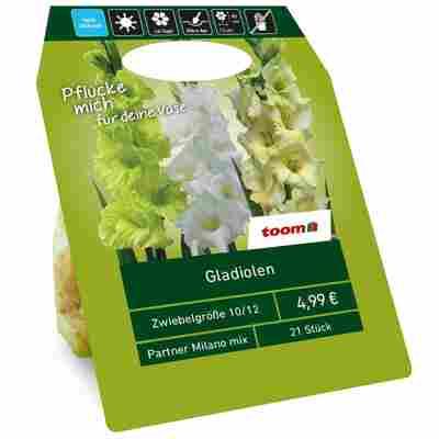 Gladiolen 'Milano' Mischung weiß/grün 21 Zwiebeln