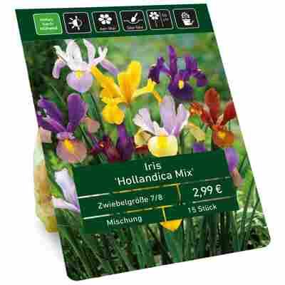 Holländische Schwertlilie violett 15 Zwiebeln