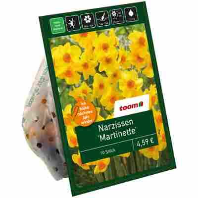 Narzisse 'Martinette' gelb-orange 10 Zwiebeln