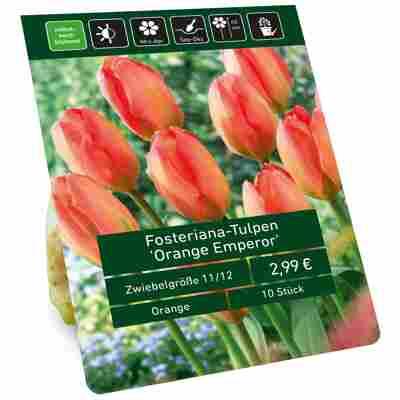Tulpe 'Orange Emperor' orange-rot 10 Zwiebeln