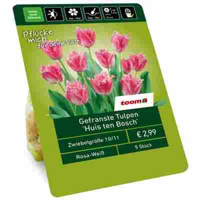 Tulpe 'Huis ten Bosch' rosa, weiß 5 Zwiebeln