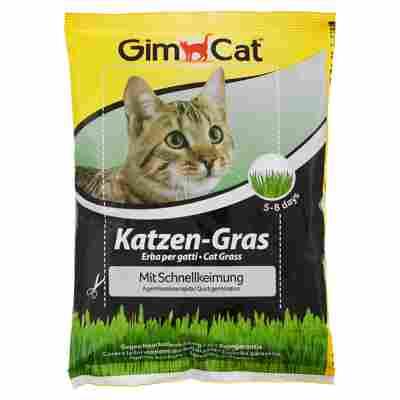 Katzengras-Samen 100 g