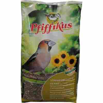 Sonnenblumenkerne gestreift, 5 kg