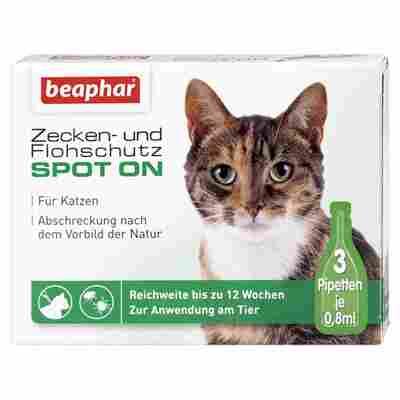 Zecken- und Flohschutz-Spot-on für Katzen 3 x 0,8 ml