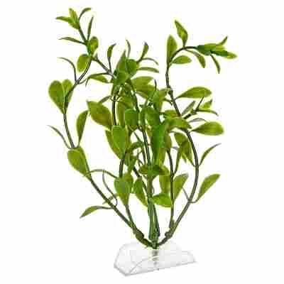 """Aquariumspflanze """"DecoArt Plantastics"""" Hygrophila Gr. S"""