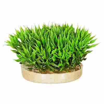 "Aquarienpflanze ""Moos"" Kunststoff 7 cm"