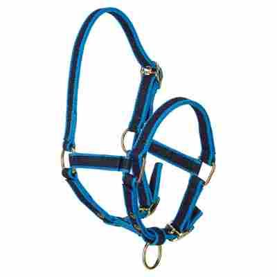 Nylon-Fohlenhalfter mit Dornschnallen blau