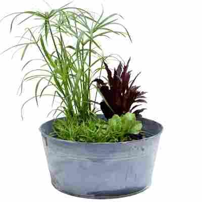 Miniteich-Set mit 4 Pflanzen und Zinkwanne Ø 27 cm
