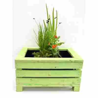 Mini-Teichkiste inkl. 4er Set Pflanzen, grün
