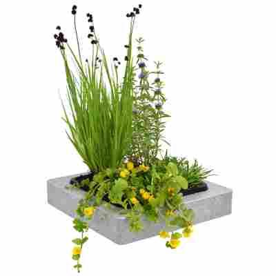 Teich-Schwimminsel mit 4 Pflanzen 30 x 30 cm