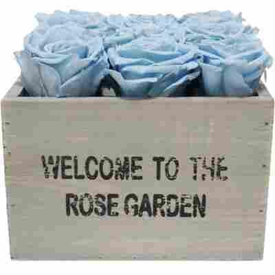 Rosenbox 'Rose Garden' grau mit 12 haltbaren hellblauen Rosen