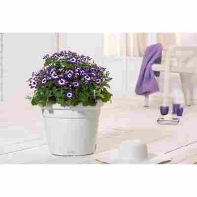 Blumenkasten 'RUSTICO Color 35' weiß, Komplett-Set