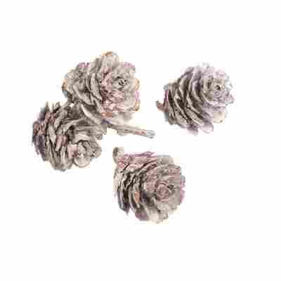 Kiefernzapfen braun 3-4 cm, 50 g