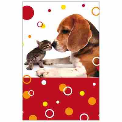 Grußkarte Allgemein 'Hund und Katze'