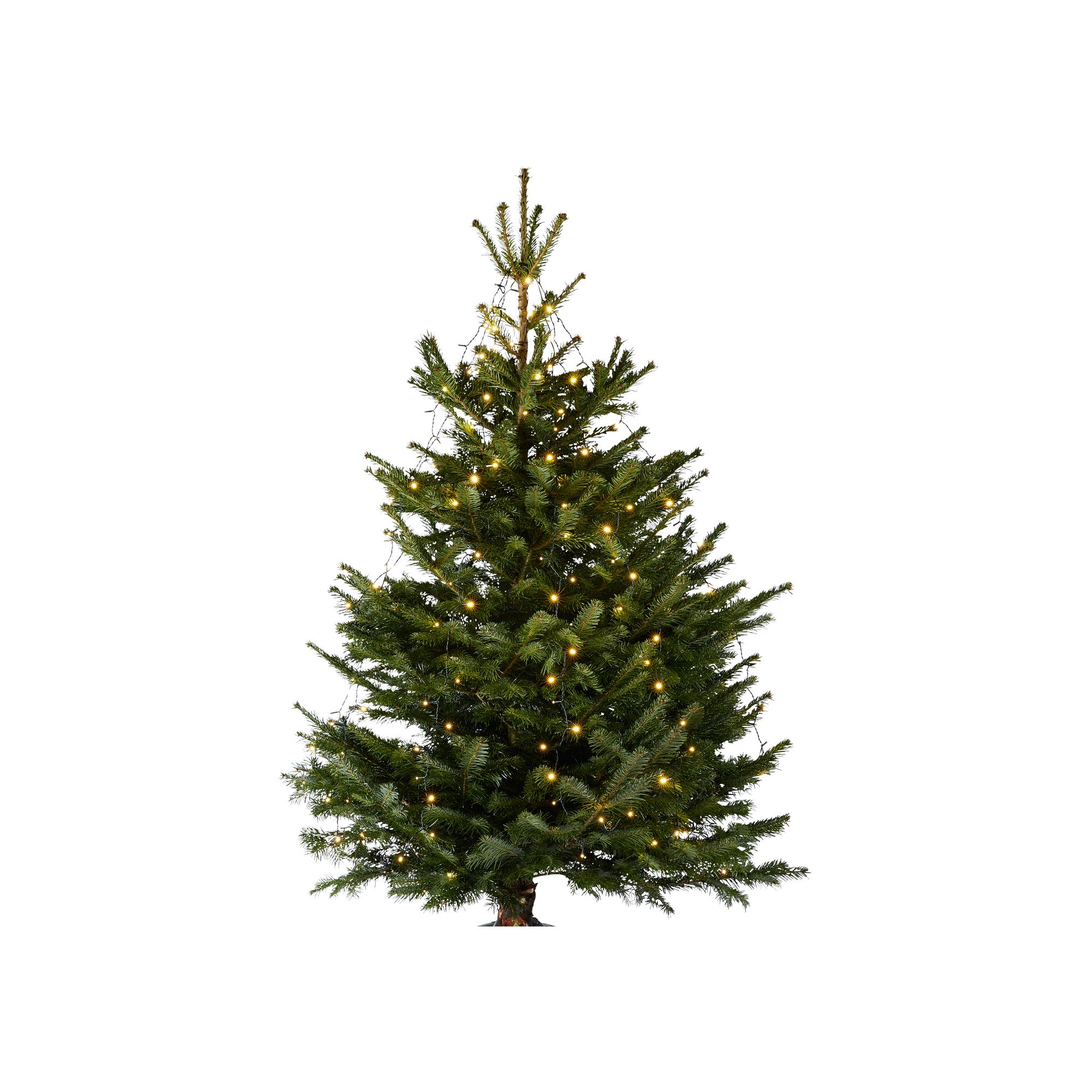 Weihnachtsbeleuchtung Außen Für Große Bäume.Baummantel Lichterkette Warmweiß 400 Leds Außen