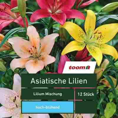 Asiatische Lilien 'Lilium Mischung', 12 Stück, mehrfarbig
