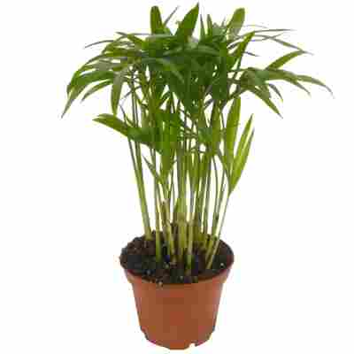 Mini-Grünpflanzen Mix 7 cm Topf