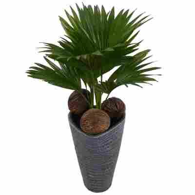 Livingston-Palme mit 22 cm Keramiktopf grau