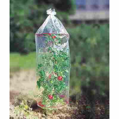 Tomatenhauben-Set transparent Ø 0,41 x 1,3 m, 3 Stück