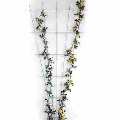 Fächerspalier silbern Zink-rip 75 x 150 cm