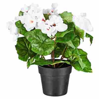 Kunstblume Begonie weiß/grün 26 cm