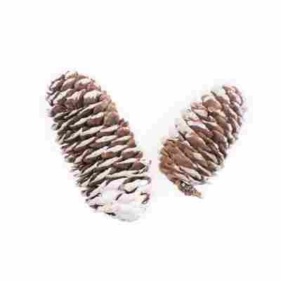 Fichtenzapfen, 6-8 cm, 50 g