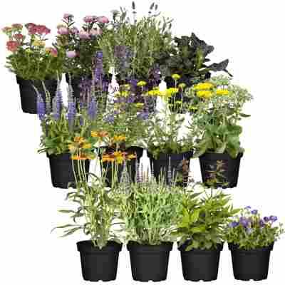 Stauden-Mix 'Schmetterlingsgarten' 12 Pflanzen für 1 m²