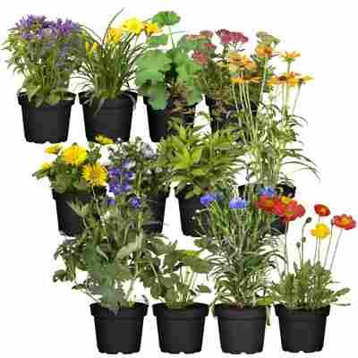 Stauden-Mix 'Bauerngarten' 12 Pflanzen für 1 m²