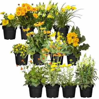 Stauden-Mix 'Gelber Garten' 12 Pflanzen für 1 m²