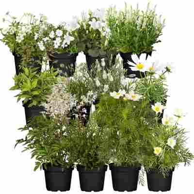 Stauden-Mix 'Weißer Garten' 12 Pflanzen für 1 m²