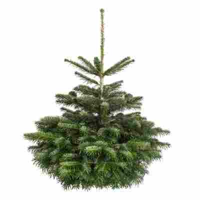 Fair Trees© Weihnachtsbaum Nordmanntanne gesägt 100-130 cm