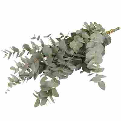 Schnittgrün-Handbund Eukalyptus 70 cm