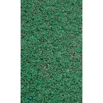 Zwergmispel 'Frieders Evergreen', 9 x 9 cm Topf, 3er-Set