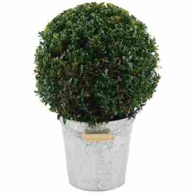 Buchsbaum-Kugel Ø 28 cm im 19 cm Zinkeimer