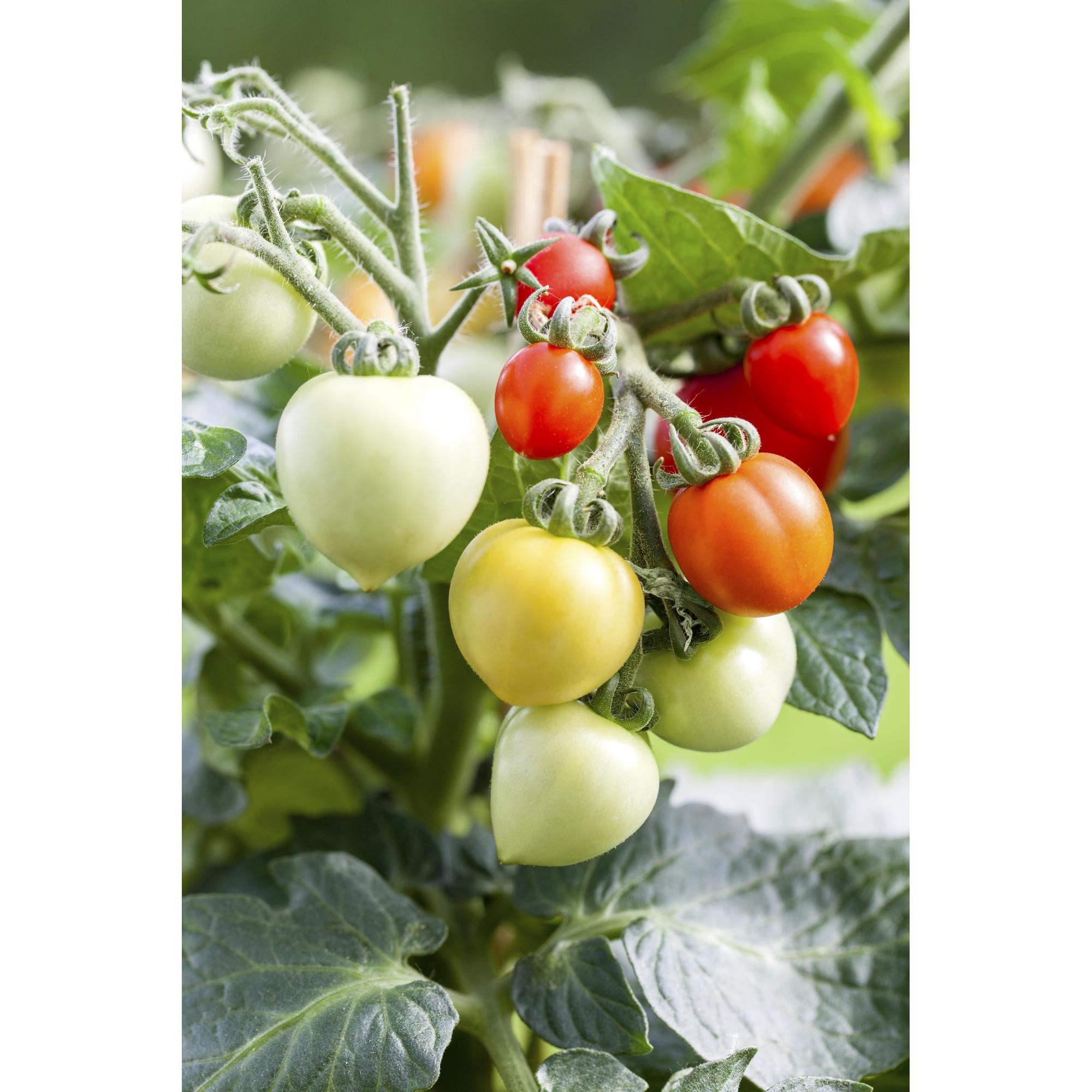 Mini Gemüse