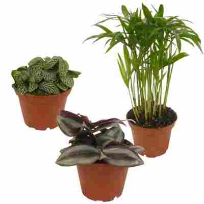 Mini-Grünpflanzen Mix 7 cm Topf,3er-Set