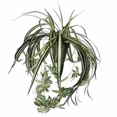 Kunstpflanze 'Chlorophytum' im Topf Ø 45 x 30 cm