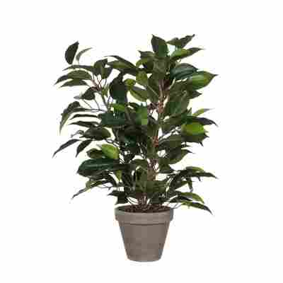 Kunstpflanze Ficus Natasja im Topf, grün 30 x 40 cm