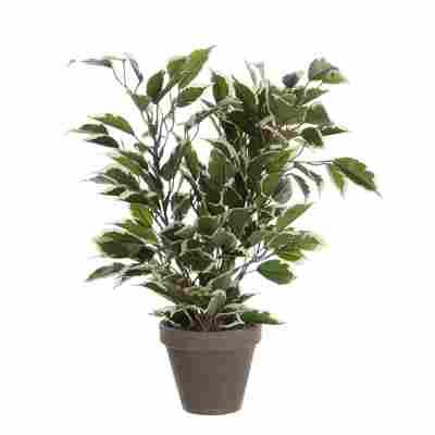 Kunstpflanze Ficus Natasja im Topf, bunt 30 x 40 cm