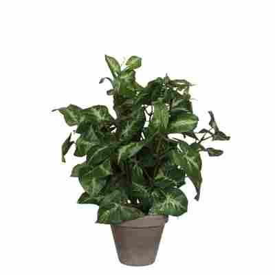 Kunstpflanze Syngonium im Topf 25 x 35 cm