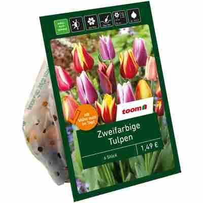 Zweifarbige Tulpen rot-gelb 6 Zwiebeln