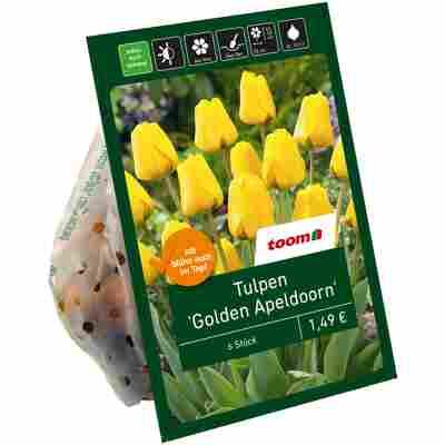 Tulpen 'Golden Apeldoorn' gelb 6 Zwiebeln