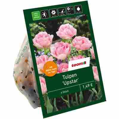 Gefüllte Tulpen rosa 6 Zwiebeln